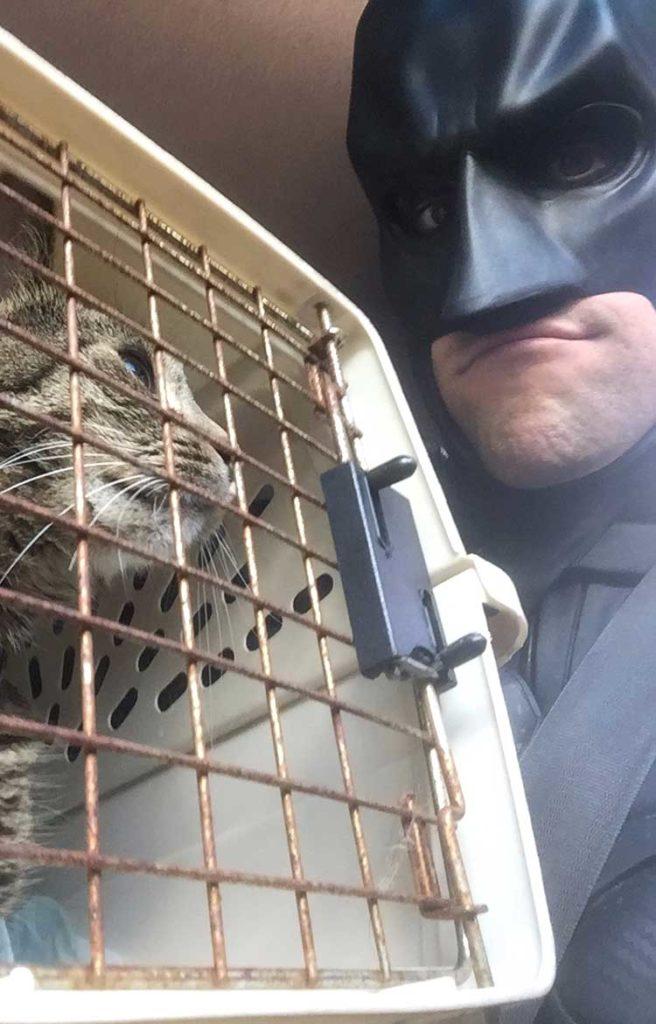 batman gatto