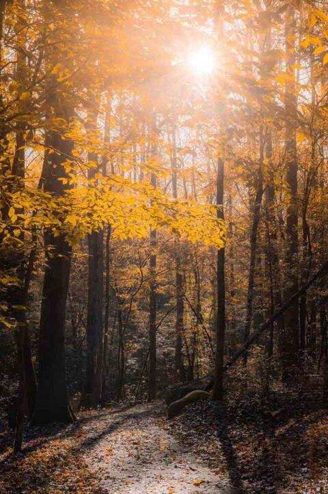 sola tra gli alberi